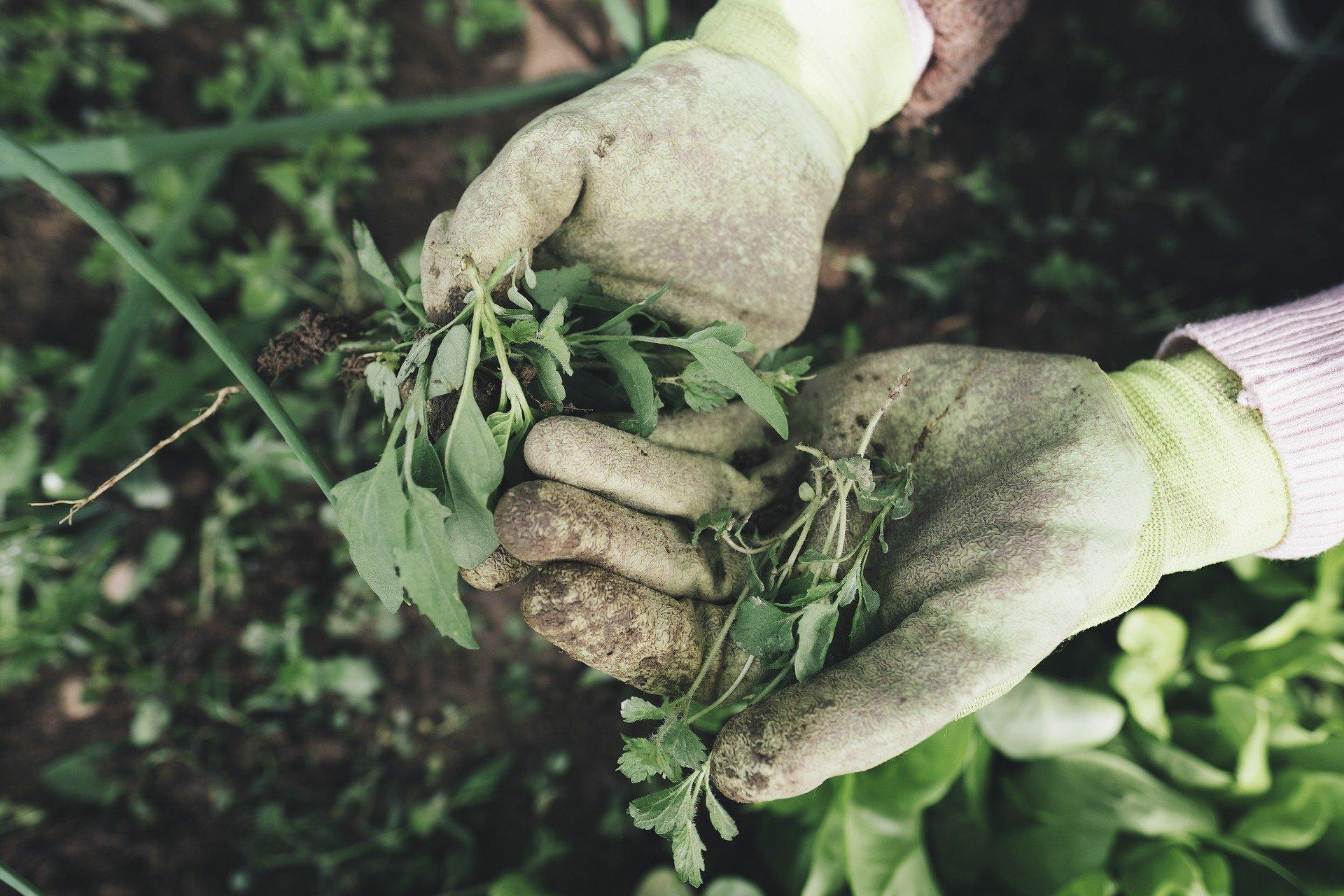 jardinage prévention blessures